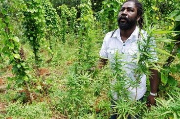 Breezy, a cannabis farmer, poses amidst his plantation in Nine Miles, Jamaica
