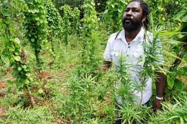 Breezy, a cannabis farmer, poses amidst his plantation in Nine Miles, Jamaica