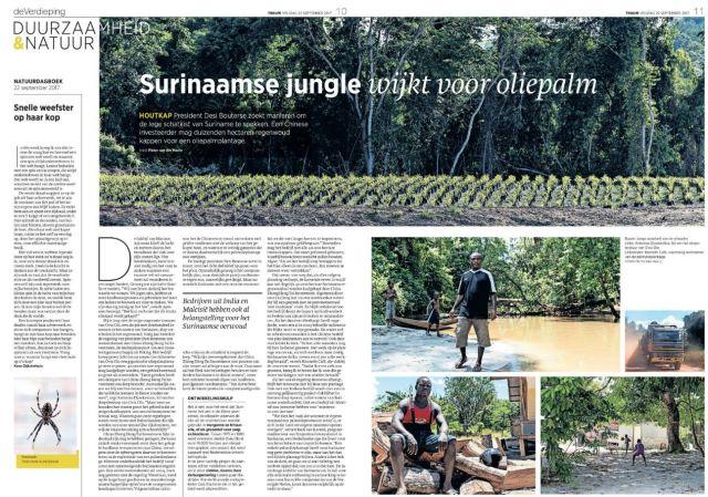 jungle wijkt voor oliepalm.jpg